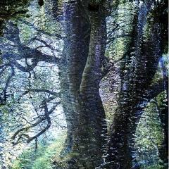 Tree magic blue